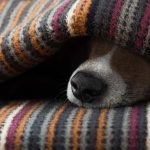 How to Help Dogs and Humans This Holiday Weekend